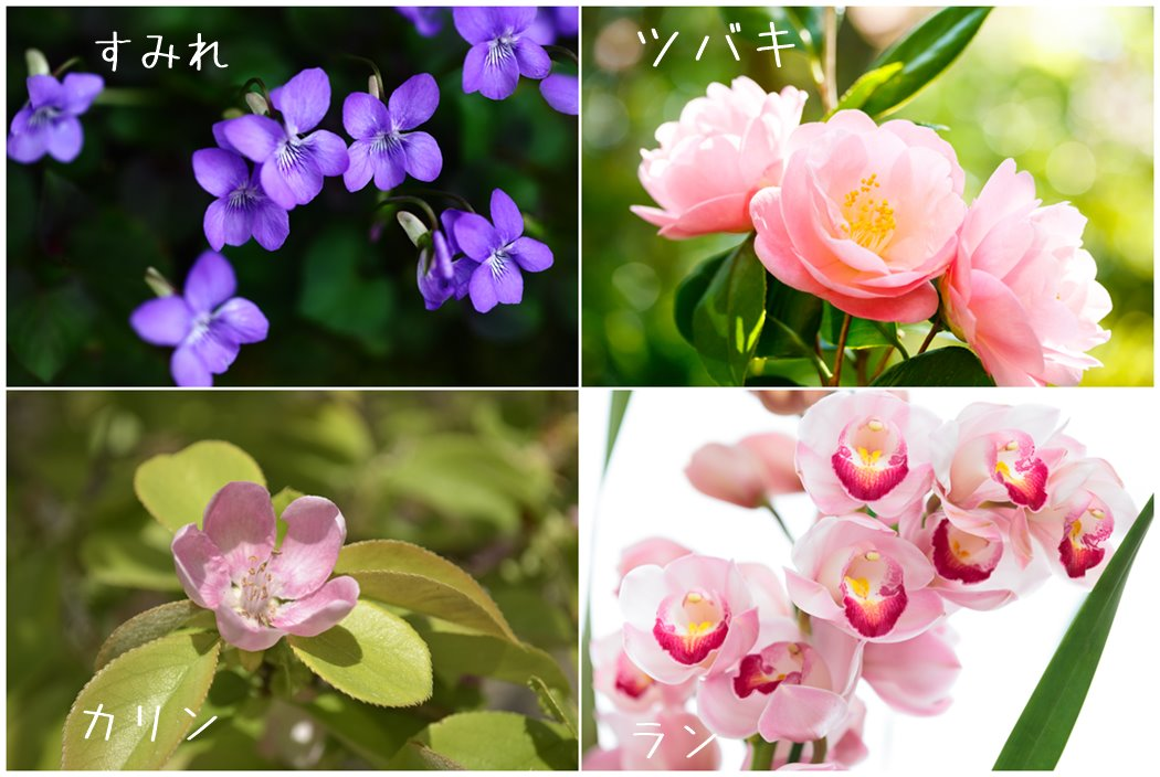 春の花、菫など